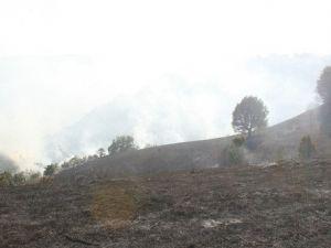 Düzcede Orman Yangını