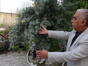 Arap Firmaya Verilen 18 Dönüm Arazideki Ağaçlar Kesilerek Otel Yapılacak