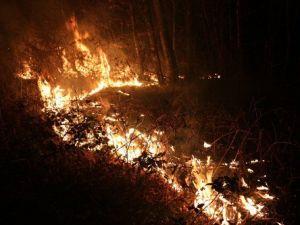 Ünyede Orman Yangını