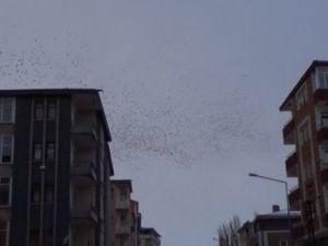 Göç Yolundaki Kuşlar Karsta Soğuk Havaya Yakalandı