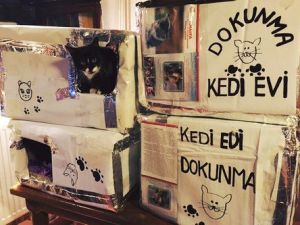 Sokak Kedileri Kedi Evleri Sayesinde Artık Üşümeyecek