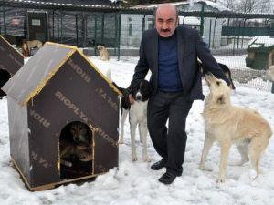 Edirnede Sokak Hayvanları Kaloriferli Ortamda Kalıyor