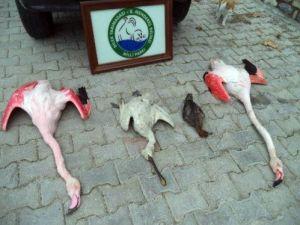 Flamingoları Vuran Kişiye Yaklaşık 8 Bin 500 Lira Ceza Kesildi