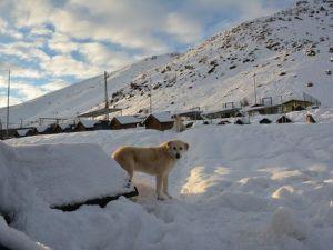 Bitlisteki Köpek Kulübeleri Kar Altında Kayboldu