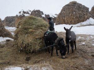 Eşekli Kızaklar ile Hayvanlarına Ot Taşıyorlar