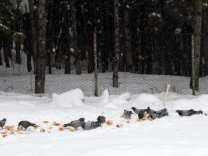 Çankayadaki Sokak Hayvanlarına Kışın Mama Desteği