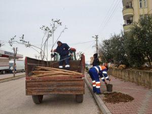 Kozanda Bulvar ve Caddeler Ağaçlandırılıyor