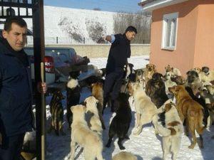 Sokak Hayvanlarına Beslenme Noktaları Oluşturuldu
