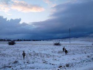 Aç Kalan Yılkı Atları Köylere İniyor