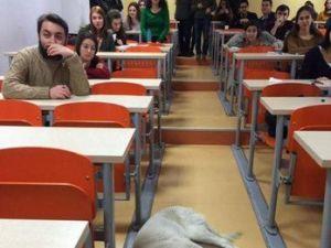 Üşüyen Köpek, Sınıfta Uyuyakaldı