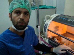 Bölgenin İlk Donanımlı Hayvan Hastanesi Tatvanda Kuruldu
