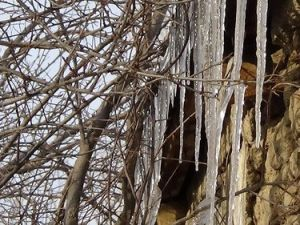 Iğdırda Ağaçlar Buz Tuttu