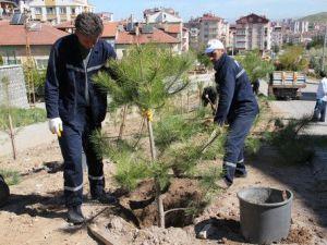 Nevşehirde Halka 200 Bin Fidan Dağıtıldı
