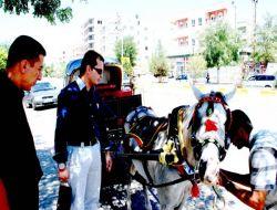 Midyat'a İlk Defa Fayton Geldi - Mardin