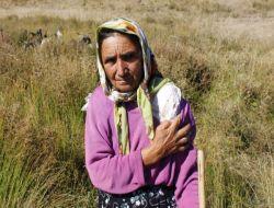 Tunceli'de Köye İnen Kurt 3 Kişiyi Yaraladı - Tunceli