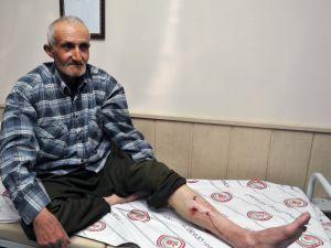 Mantar Toplamaya Giden Vatandaşa Ayı Saldırdı