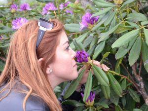 Yaylada Orman Gülleri Açtı