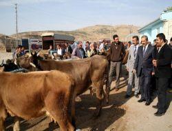 Sivas'ta Kurban Pazarı Yer Tahsisi Müracaatları - Sivas