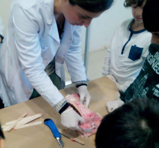 Geleceğin Doktorları Hayvan Kemiklerini Sıyırarak İskelet Sistemini Öğrendi