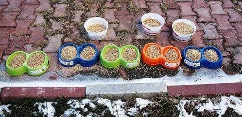 Iğdır'da Aç Kalan Kuşlar İçin Yem Bırakıldı