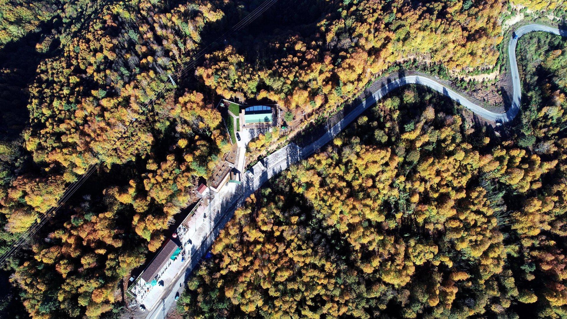 Zonguldak ormanları sonbaharda renk çümbüşüne sahne oldu